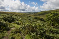 Environment of Wistman`s Wood - an ancient landscape on Dartmoor, Devon, England royalty free stock photo