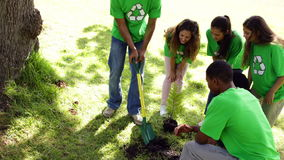 Environmental activists planting a tree in the park. On a sunny day stock video footage