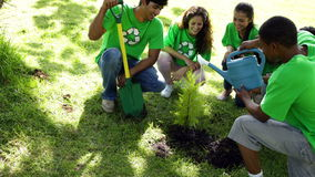 Environmental activists watering a new tree in the park stock footage