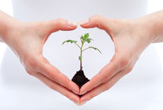 Environmental awareness and protection concept. Woman holding young seedling Royalty Free Stock Image