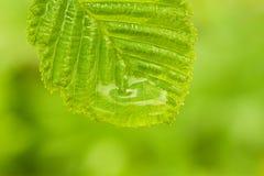 Environmental background Stock Image