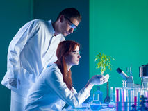 Environmental care. Side view of botanical researchers holding a beautiful green plant, in a laboratory Royalty Free Stock Photography