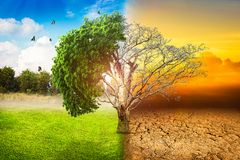 Environmental concepts, Live and dead big tree royalty free stock photography