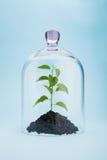 Environmental conservation Royalty Free Stock Photo
