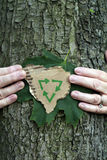 Environmental conservation tree. Environmental conservation People concept: Hands holding green leaf and recycling symbol on recycled cardboard while hugging a Stock Photo
