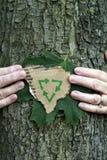 Environmental conservation tree stock photo