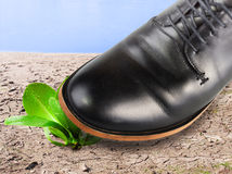 Environmental destruction. Mens foot kills the last plant which survived on cracked land Royalty Free Stock Photography