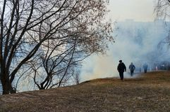 Environmental disaster.a fire in the forest, dry grass is burning royalty free stock images
