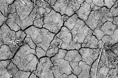 Environmental disaster. Global warming. Dried cracked land. Drought and lack of moisture in the soil. Royalty Free Stock Images