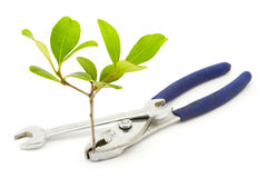 Environmental Engineering. A pair of pliers holds a small plant stock photography