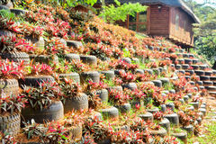Environmental flower bed-wall Royalty Free Stock Image