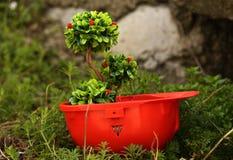 Environmental friendly Stock Photos