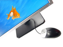 Environmental Friendly Green Technology. A pair of goldfishes coming out from a Wide Screen Computer Monitor (Isolated on white background Stock Photography