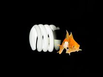 Environmental Friendly Light Bulb Royalty Free Stock Photo