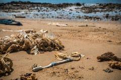 Environmental Pollution on the Beach in Thailand Stock Photos