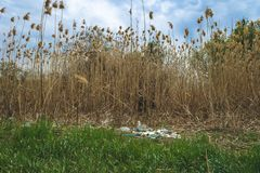 Environmental pollution. Garbage in nature. Plastic bottles and cellophane bags in the river stock image