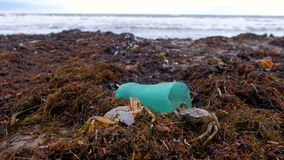 Plastic bottles, died crabs and other debris among the seaweed on the sandy seashore. Environmental pollution by plastic and death of animals from garbage stock video footage