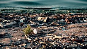 Environmental pollution with trash and plastic wastes on beach stock video footage