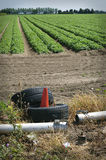 Environmental pollution - waste in field. Suffolk, UK Royalty Free Stock Photos