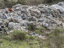 Environmental problem. Wastes which contaminate soils Stock Images
