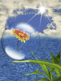 Environmental Protection. This image shows a daisy in a bubble, and with a background of sea and sky Stock Image
