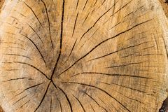 Environmental protection concept-cross section of the tree close-up, texture royalty free stock photos