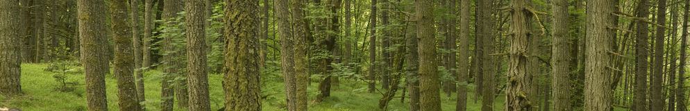 Environmental Tree Landscape Banner Panorama Royalty Free Stock Photo