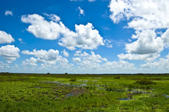 Environmental Wetlands Royalty Free Stock Images