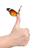 Environmental and wild life protection success concept Royalty Free Stock Image