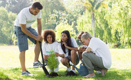 Environmentalists planting in park Royalty Free Stock Images
