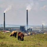 Environnement mis en danger photographie stock libre de droits