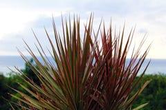 Environnement tropical Image libre de droits