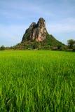 Environnement vert procurable en Thaïlande photos stock