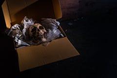 Envoyez de la mort Images libres de droits