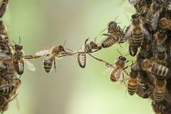 Enxame da abelha da ponte das abelhas imagens de stock