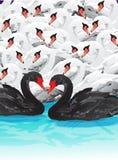 Enxame das cisnes Imagens de Stock