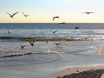 Enxame das gaivota na luz da noite foto de stock royalty free