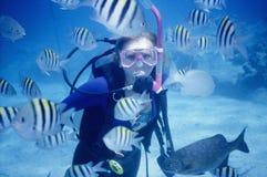 Enxame dos peixes Fotografia de Stock Royalty Free