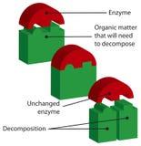 enzym royaltyfri illustrationer
