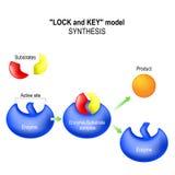 enzym syntes royaltyfri illustrationer