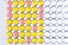 Enzyme-linked immunosorbent assay or ELISA plate. Immunology testing method in medical laboratory stock photo