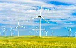 Eolian green field Stock Image