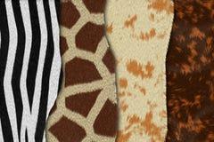 : eopard huid Stock Foto's