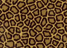 Leopard texture background stock photography