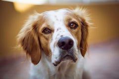 Dog close Royalty Free Stock Image