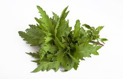 Epazote herb. Epazote is a herb commonly used in mexican cooking royalty free stock image