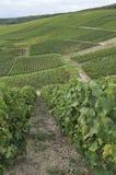 epernay bergig vingård för champagne 3 Arkivfoton