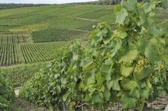 epernay bergig vingård för champagne 4 Arkivfoton