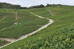 epernay bergig vingård för champagne 6 Arkivfoton
