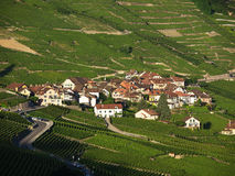 Epesses In Lavaux During Summer Stock Image